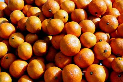 Sweet fresh pack of Satsumas