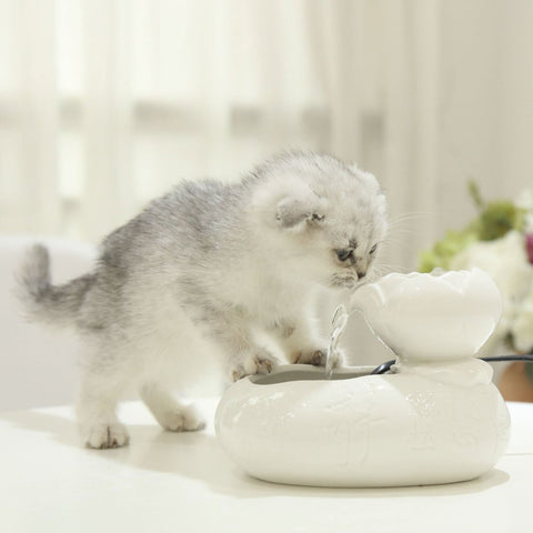 Image of Cat Drinking Feeder - WowGoBuy