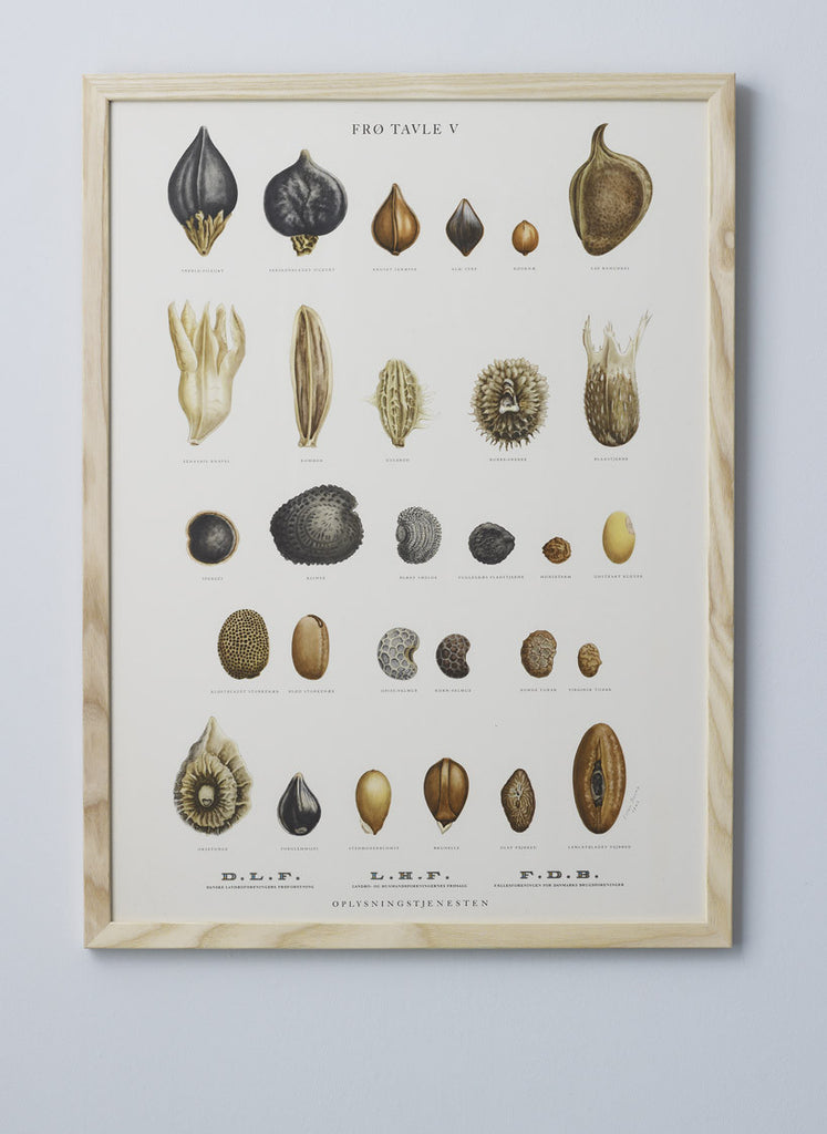 Framed Vintage Seed Illustrations