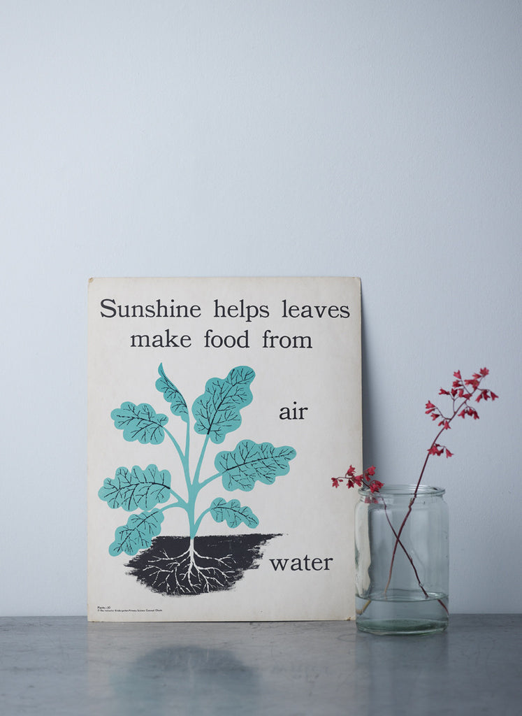 Sunshine helps leaves print