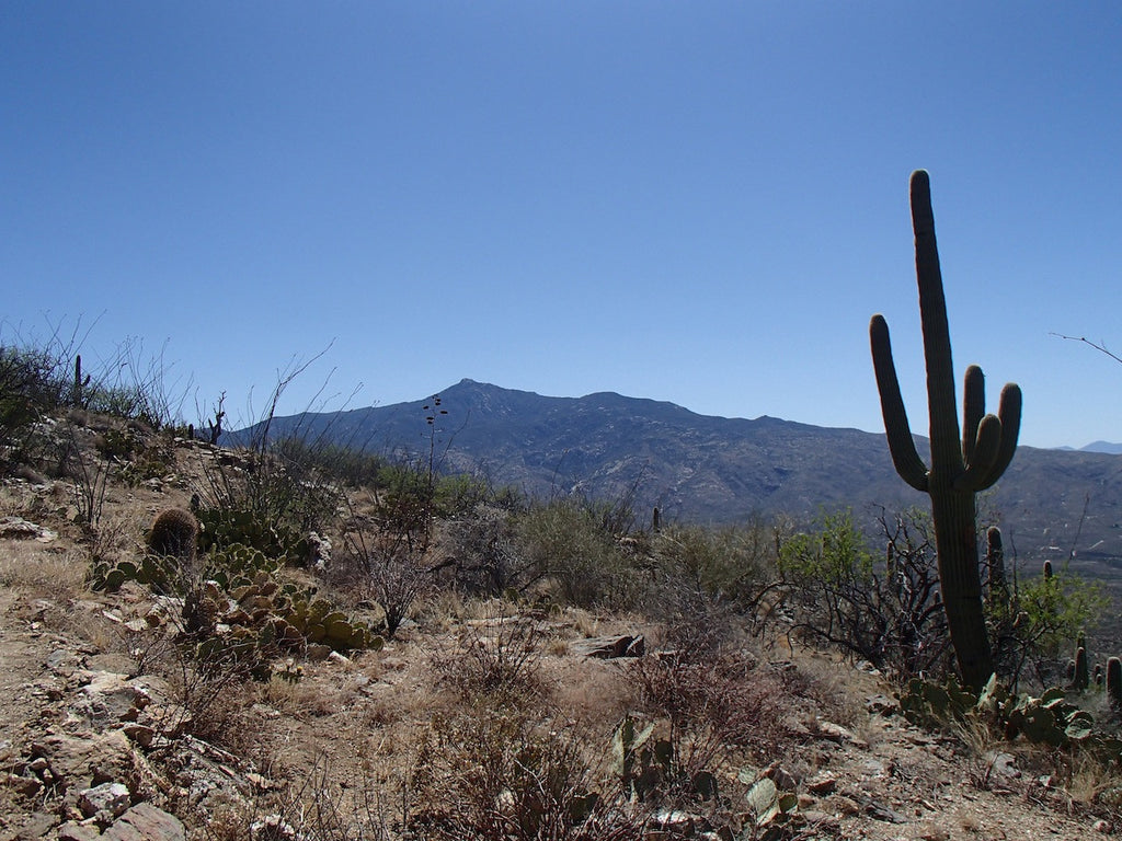 Spring Is for Hiking: 2 Tune-Up Hikes in Tucson