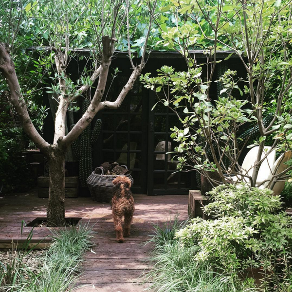 Abigail Ahern green garden with Maud the dog