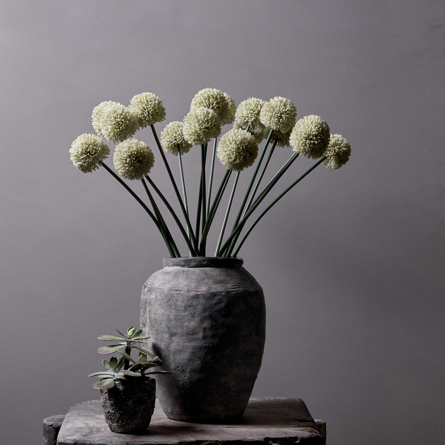 Allium White (4724611940448)