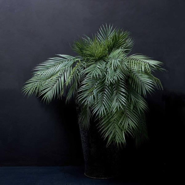 FOREST FROND|abigail ahern