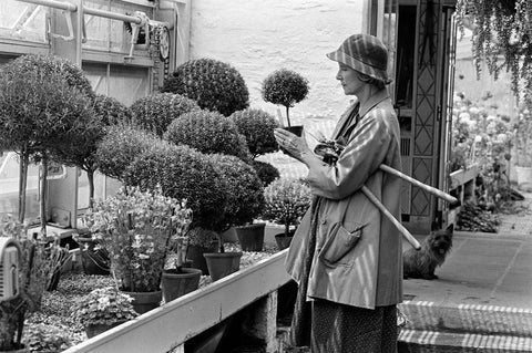 vintage photo of a woman gardening in a greenhouse