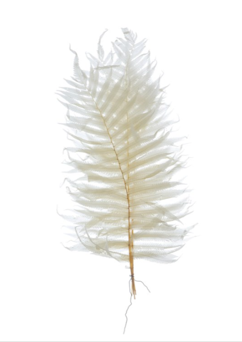 Dried Natural Fern - 16""