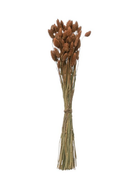 Dried Natural Canary Grass Bunch - Sienna