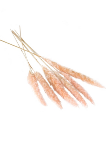"25"" Pink Pampas Grass (Pickup ONLY)"