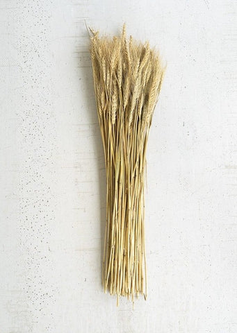 Natural Wheat Stems Bundle (Pickup Only)