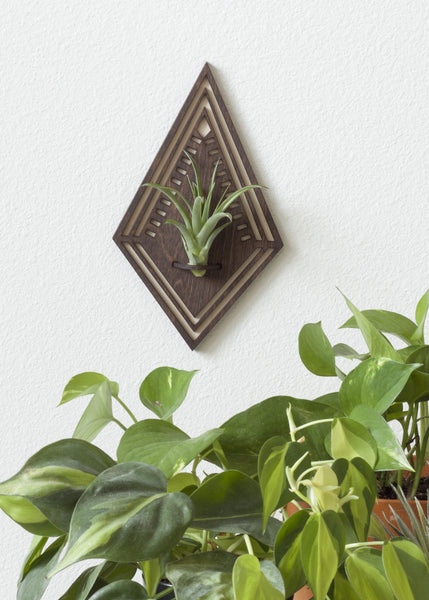 Diamond Air Plant Wall Hanger
