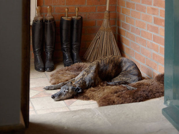 Sheepskin dog beds