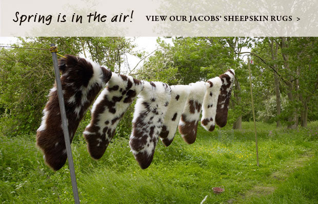Spring is in the air - view our Jacobs sheepskin rugs