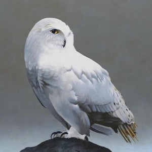 Snowy Owl on Rock