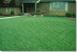 Fescue Grass Lawn Seed