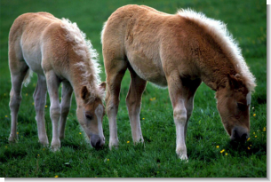 Shop Pasture Grass Seed