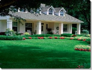 Centipede Grass Lawn Seed