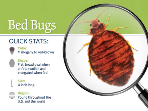 Bed Bug Control Product Catalog