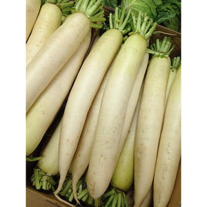 Daikon Radish Food Plot Seed - 1 Lb. - Seed World