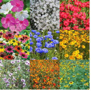 CGIG Wildflower Mixture Seeds for Southeast - 1/2 Lb.
