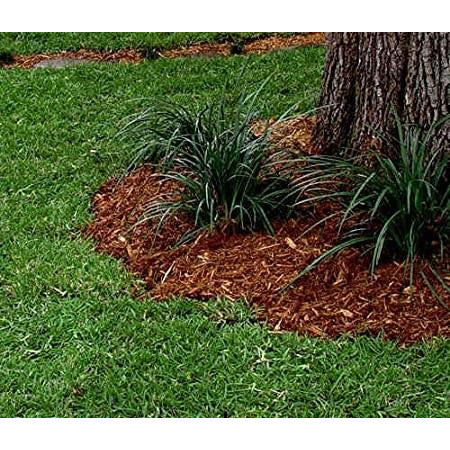 Centipede Grass Seed (Coated) - 4 Oz.