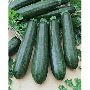 Squash Garden Spineless Hybrid - 1 packet - Seed World