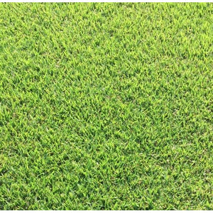 Zoysia Grass Plugs - 1 Tray