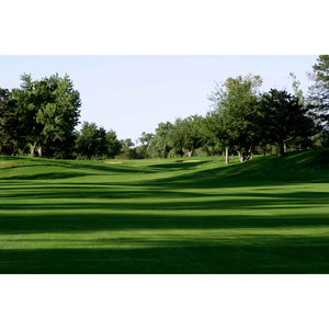 Monaco Bermudagrass Seeds (Riviera Bermuda Alternative) - 25 Lbs. - Seed World