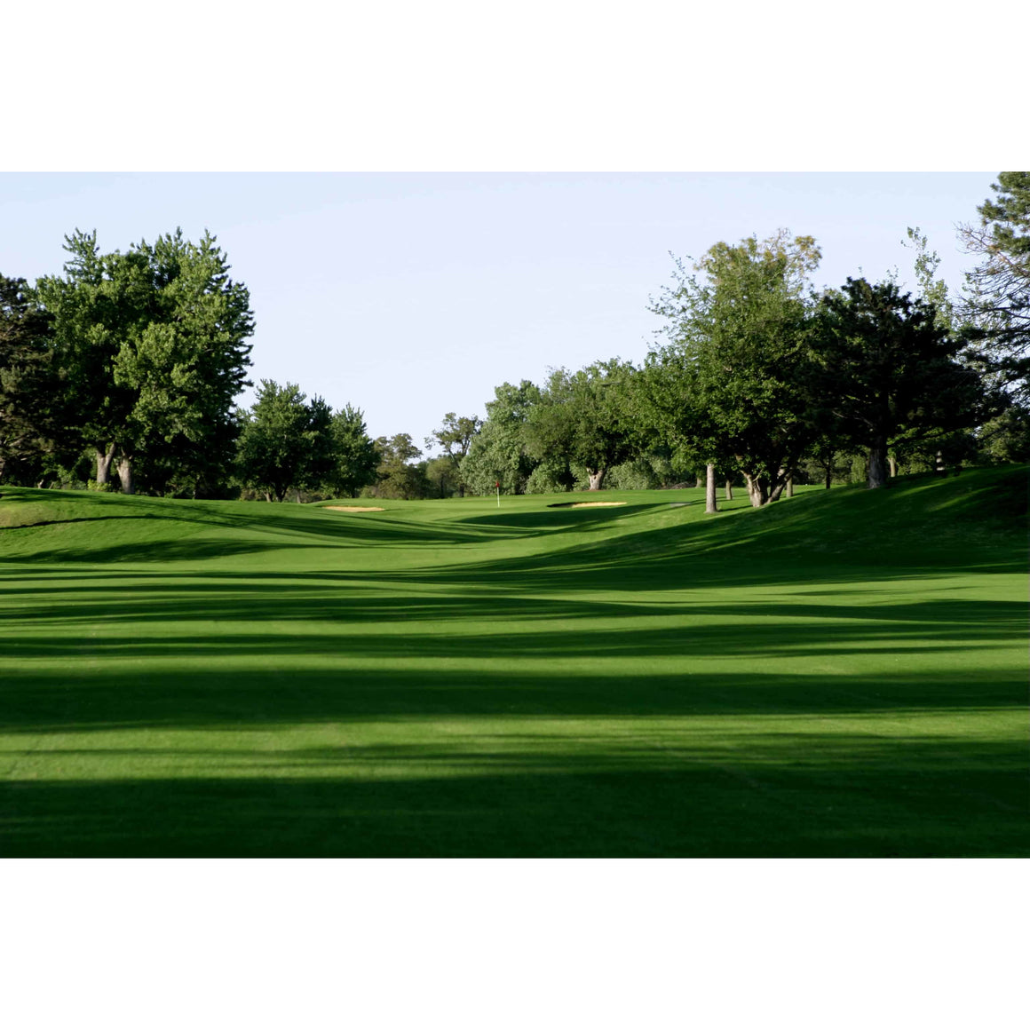 Monaco Bermudagrass Seeds (Riviera Bermuda Alternative) - 25 Lbs.