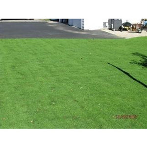 Creeping Bentgrass Seed - 1 Lb.
