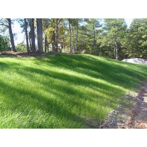 Sahara Bermuda Grass Seed Unhulled (Certified) - 50 Lbs. - Seed World