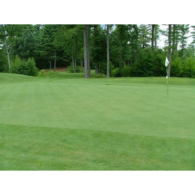 Bentgrass Putting Green Seeds