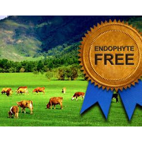 Kentucky 32 Endophyte Free Tall Fescue Grass Seed - 1 Lb.