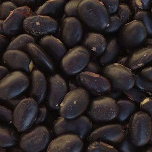 Laredo Soybean Seed - 1 Lb. - Seed World