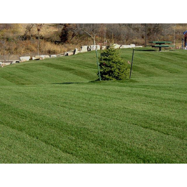 Midnight Kentucky Bluegrass Seed - 1 Lb.