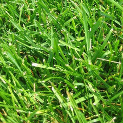 Argentine Bahia Grass Seed for Pasture Application - Seed World ...