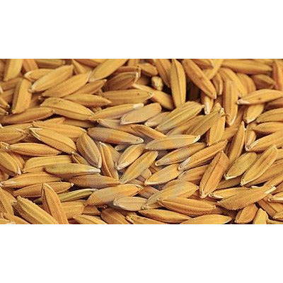 Rex Rice Seed Certified - 1 Lb.
