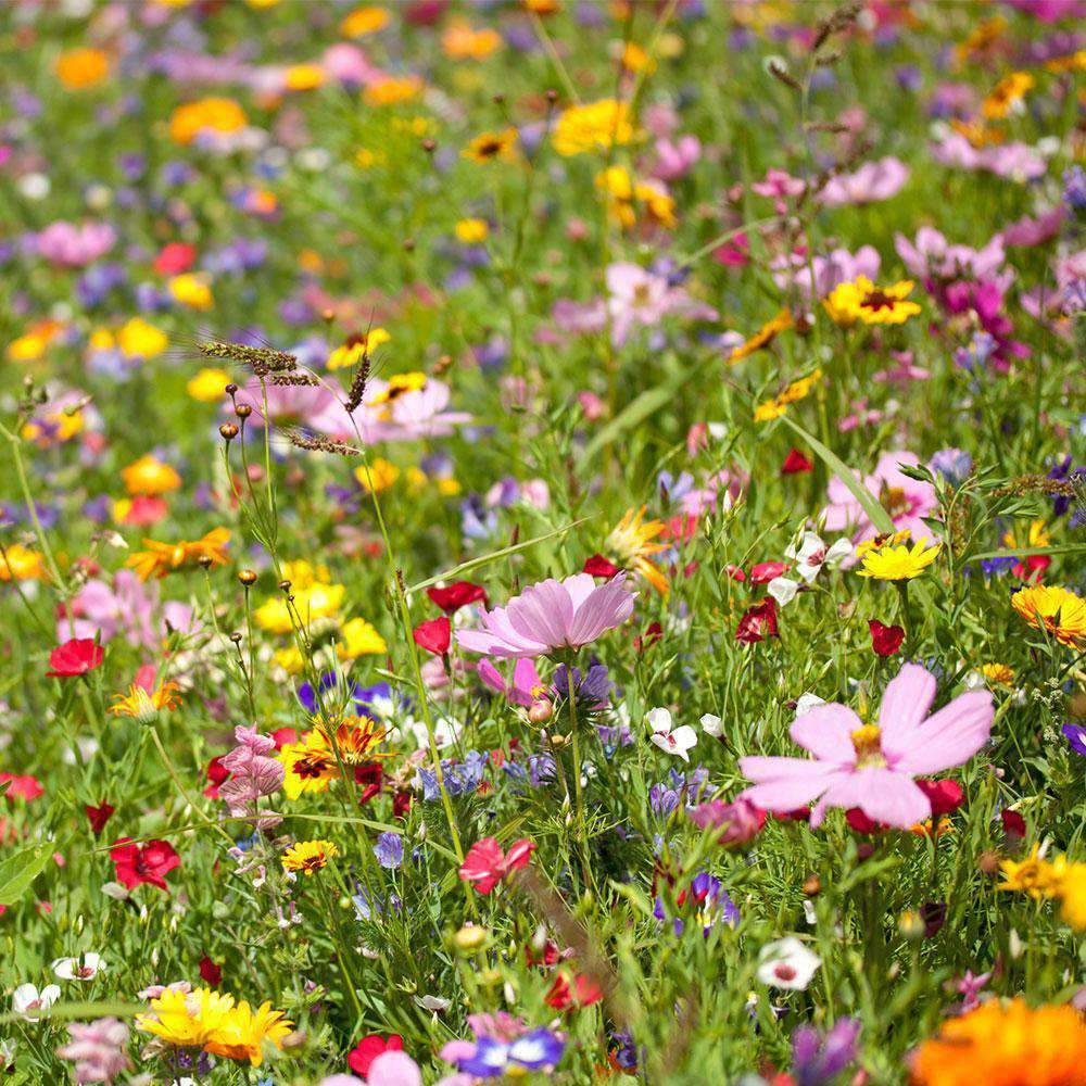 CGIG Wildflower Mixture Seeds for Southeast - 5 Lbs.