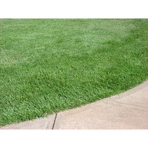 Kentucky 31 Tall Fescue Grass Seed - 1 Lb.