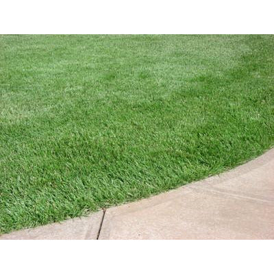 Kentucky 31 Tall Fescue Grass Seed also Known as K31.   Seed World