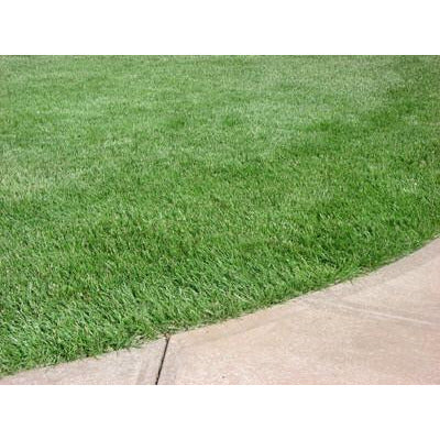 Bulldog 51 Tall Fescue Grass Seed - 1 Lb.