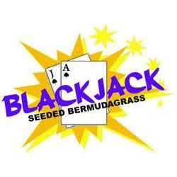 Blackjack Bermuda Grass Seed