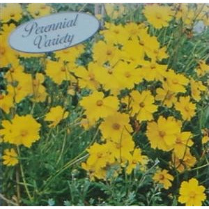 Coreopsis Sunburst Seed - 1 Packet - Seed World
