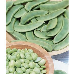 Lima Bean Fordhook Bush Seed Heirloom - 1 Packet