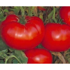 Tomato Delicious Seed Heirloom