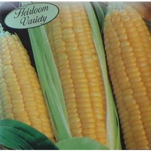 Sweet Corn Kandy Korn Seed Heirloom - 1 Packet - Seed World