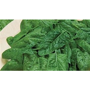 Spinach Melody Seed Hybrid - 1 packet - Seed World