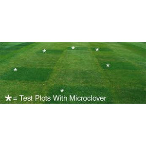 Micro Clover Seed (Pipolina) (Coated & Inoculated) - Seed World