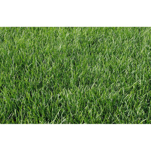 Kentucky Bluegrass Seed - 1 Lb. - Seed World