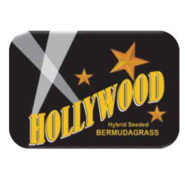 Hollywood Bermuda Grass Seed - 25 lbs