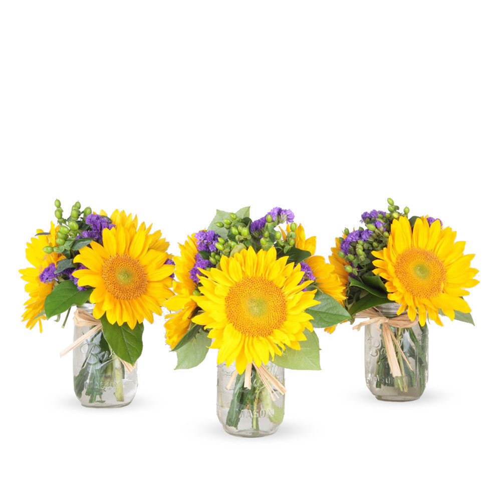 Special of Color POP - 3 Mason Jar Bouquet